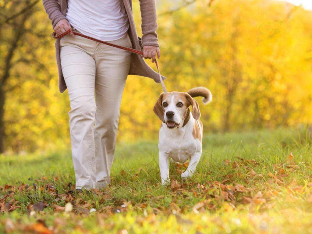 dog walking can be a fun thing to do to make a little money at Christmas, it is a great side hustle at Christmas.
